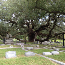 Glenwood Cemetery, Houston Texas