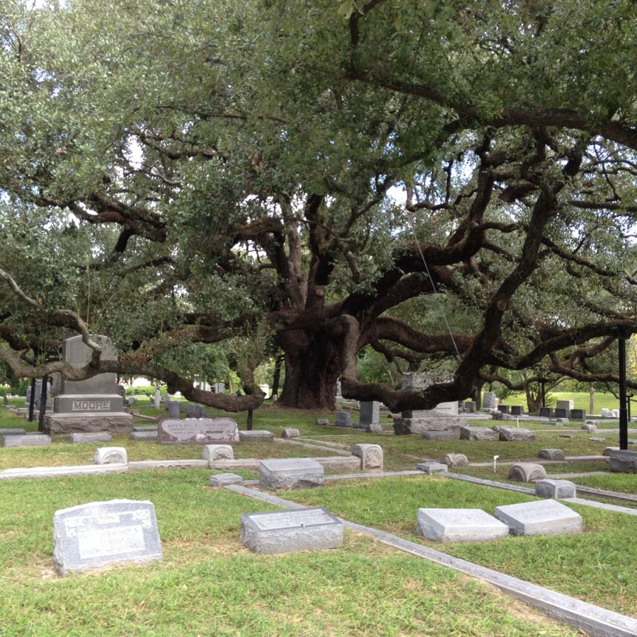 Cemetery Gallery